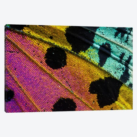 Butterfly Wing Macro-Photography XXXI Canvas Print #DGU38} by Darrell Gulin Canvas Artwork