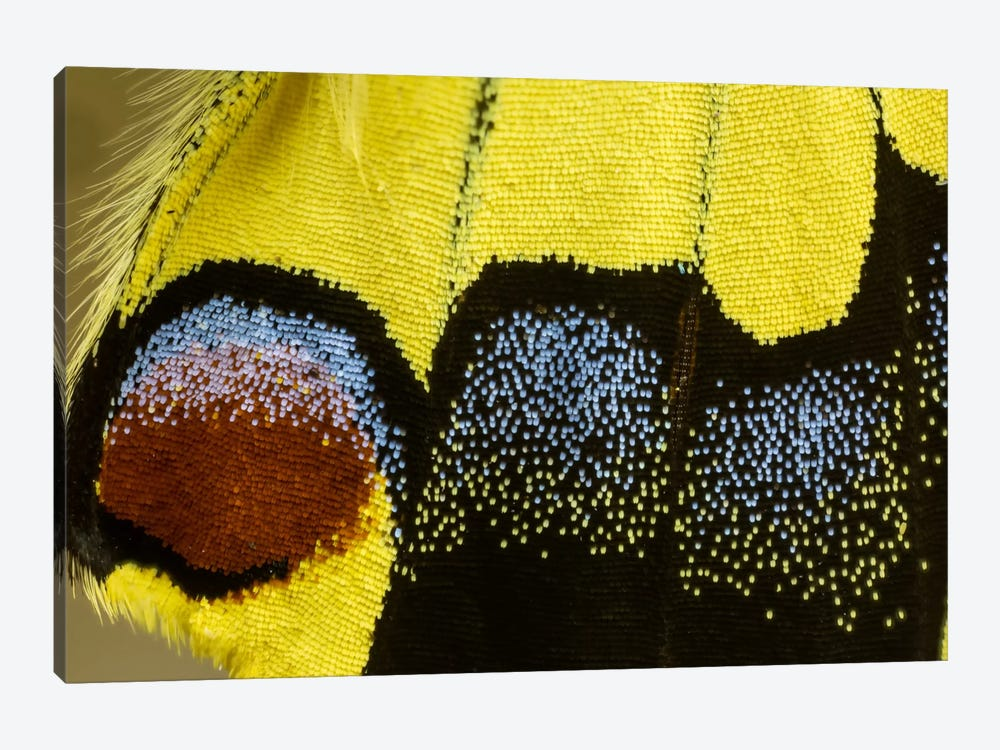 Butterfly Wing Macro-Photography XXXII by Darrell Gulin 1-piece Canvas Artwork