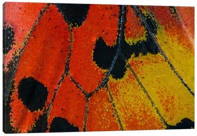 Butterfly Wing Macro-Photography XXXIV Canvas Art Print
