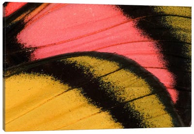 Butterfly Wing Macro-Photography XXXV Canvas Art Print