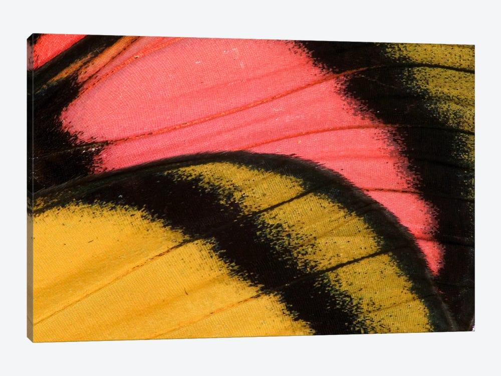 Butterfly Wing Macro-Photography XXXV by Darrell Gulin 1-piece Canvas Art