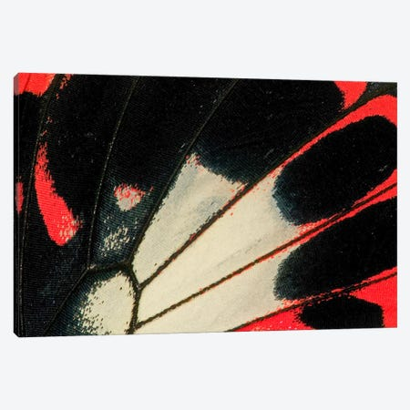 Butterfly Wing Macro-Photography XXXVI Canvas Print #DGU43} by Darrell Gulin Canvas Art Print