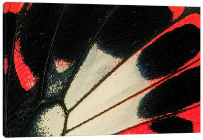 Butterfly Wing Macro-Photography XXXVI Canvas Art Print