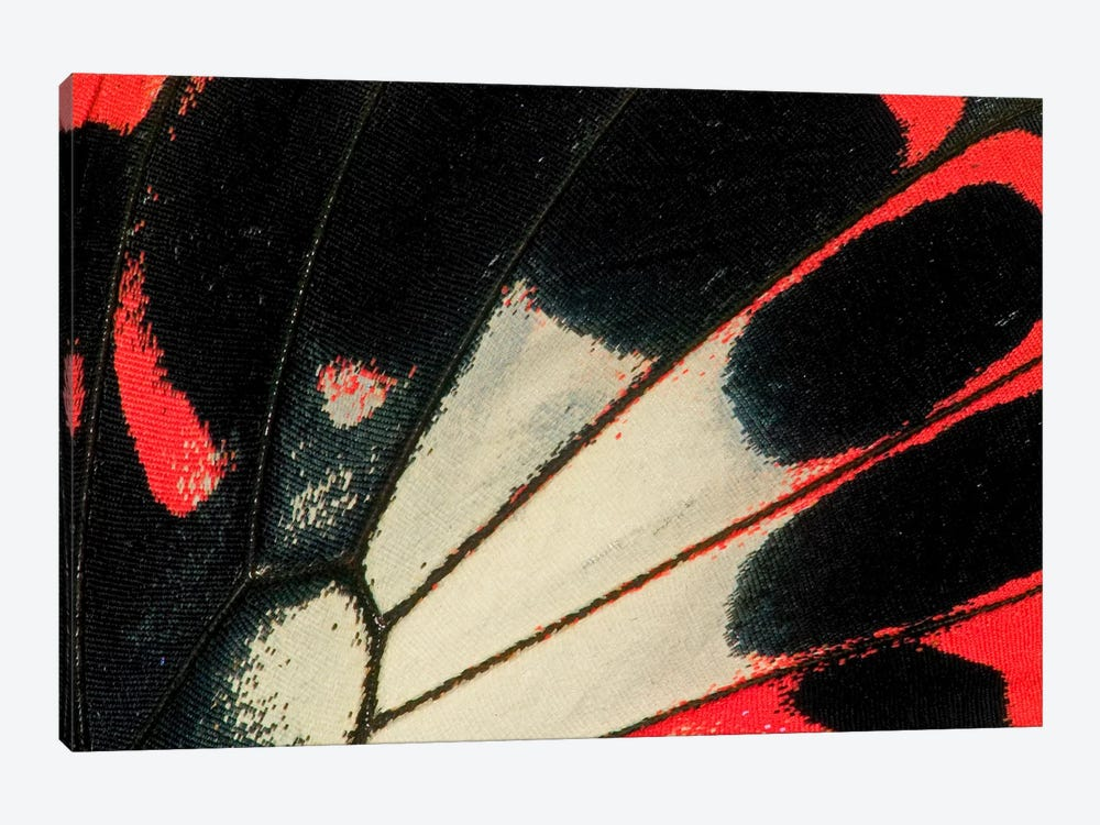 Butterfly Wing Macro-Photography XXXVI by Darrell Gulin 1-piece Art Print