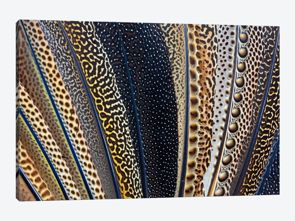 Argus Pheasant Wing Macro-Photography by Darrell Gulin 1-piece Art Print