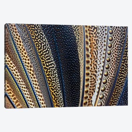 Argus Pheasant Wing Macro-Photography Canvas Print #DGU45} by Darrell Gulin Canvas Art