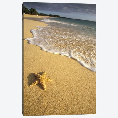 Lone Starfish, Big Beach, Makena State Park, Maui, Hawai'i, USA Canvas Print #DGU46} by Darrell Gulin Canvas Artwork