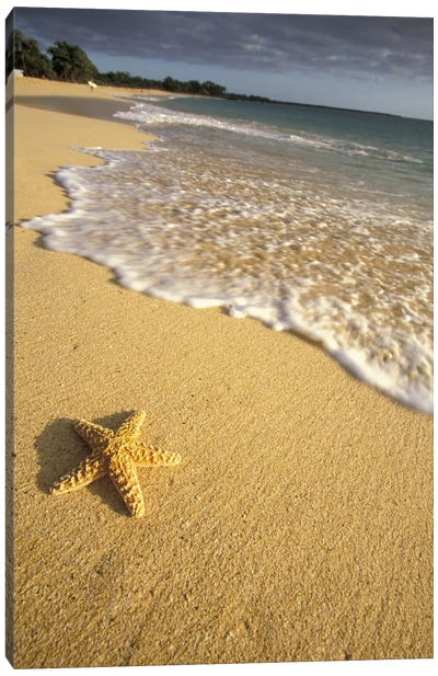 Lone Starfish, Big Beach, Makena State Park, Maui, Hawai'i, USA Canvas Art Print