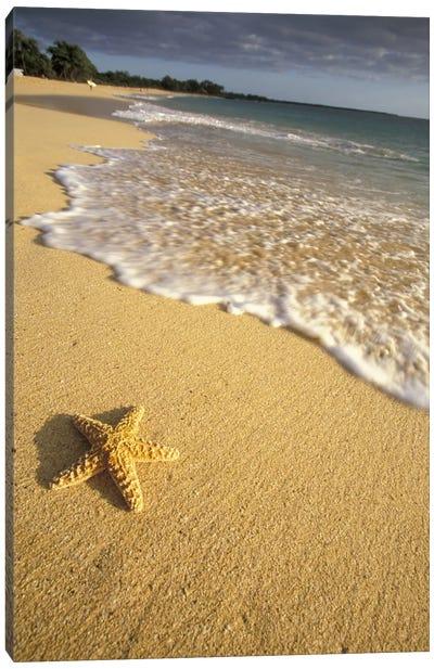 Lone Starfish, Big Beach, Makena State Park, Maui, Hawai'i, USA Canvas Art Print