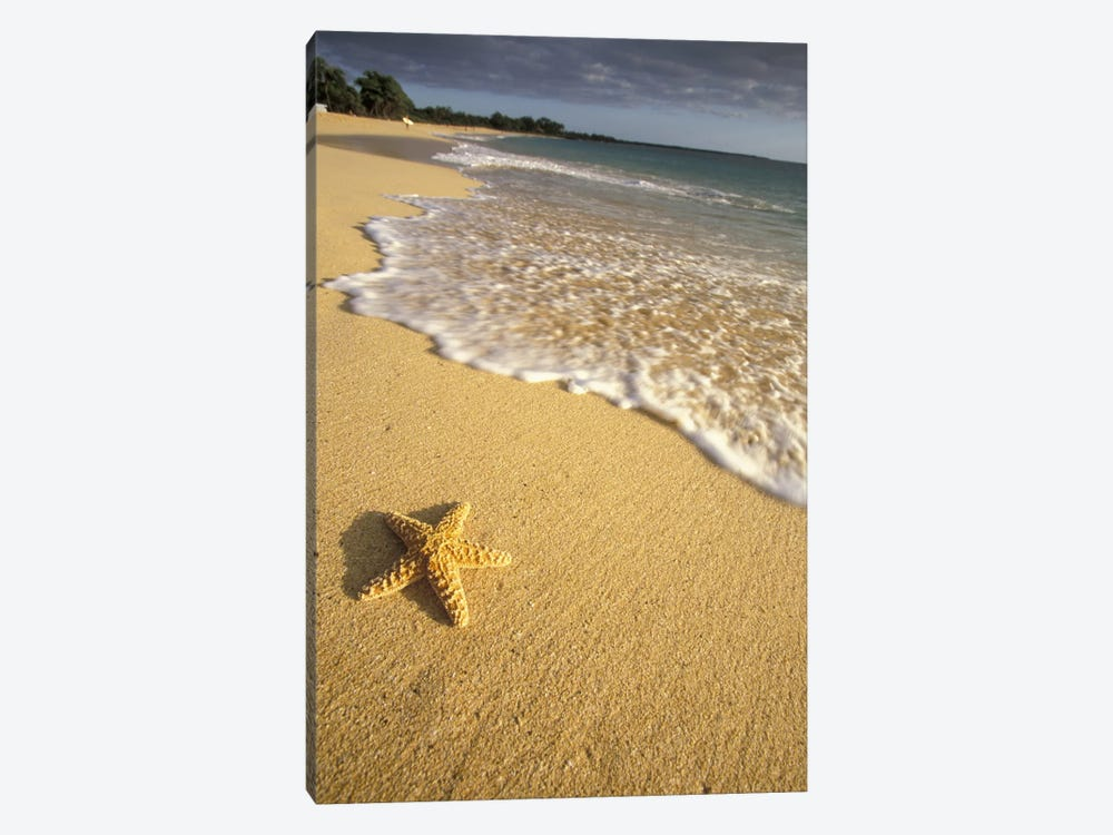Lone Starfish, Big Beach, Makena State Park, Maui, Hawai'i, USA by Darrell Gulin 1-piece Canvas Wall Art