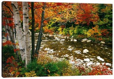 Autumn Landscape, Swift River, White Mountains, New Hampshire, USA Canvas Print #DGU47