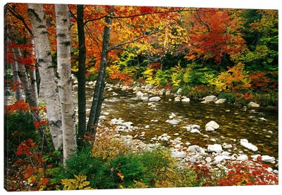Autumn Landscape, Swift River, White Mountains, New Hampshire, USA Canvas Art Print