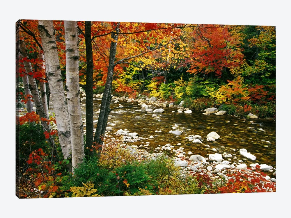 Autumn Landscape, Swift River, White Mountains, New Hampshire, USA by Darrell Gulin 1-piece Canvas Print