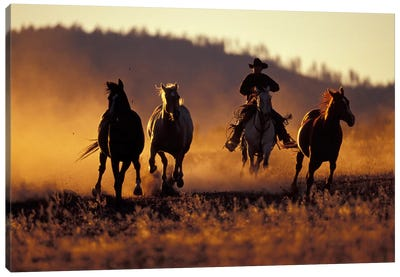 Horse Roundup, Ponderosa Ranch, Seneca, Grant County, Oregon, USA Canvas Art Print