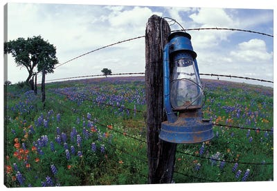 Wide-Angle View Of A Blue Lantern Hanging On A Barbed Wire Fence Post In A Wildflower Field, Lytle, Texas, USA Canvas Art Print