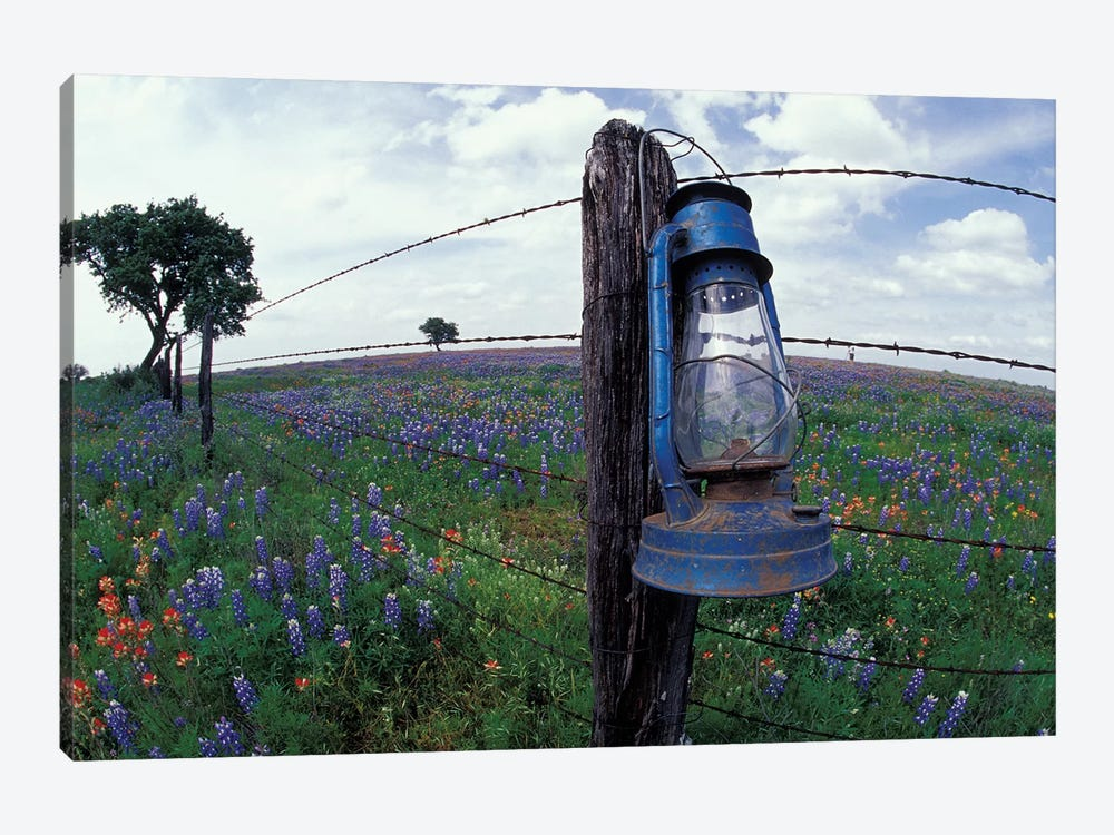 Wide-Angle View Of A Blue Lantern Hanging On A Barbed Wire Fence Post In A Wildflower Field, Lytle, Texas, USA by Darrell Gulin 1-piece Canvas Print