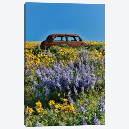 Abandoned car in springtime wildflowers, Dalles Mountain Ranch State Park, Washington State I Canvas Print #DGU57} by Darrell Gulin Canvas Art Print