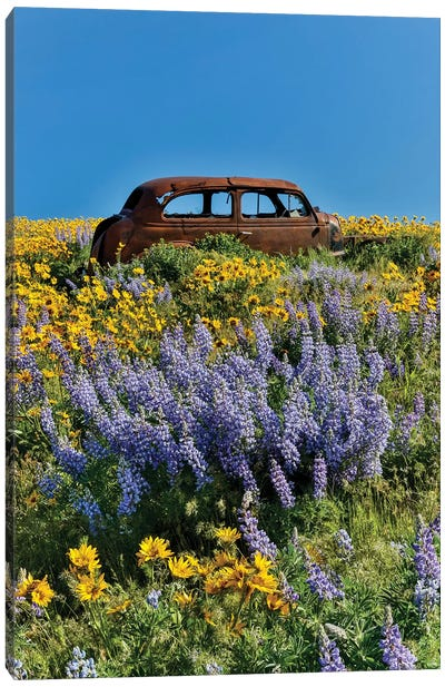 Abandoned car in springtime wildflowers, Dalles Mountain Ranch State Park, Washington State I Canvas Art Print