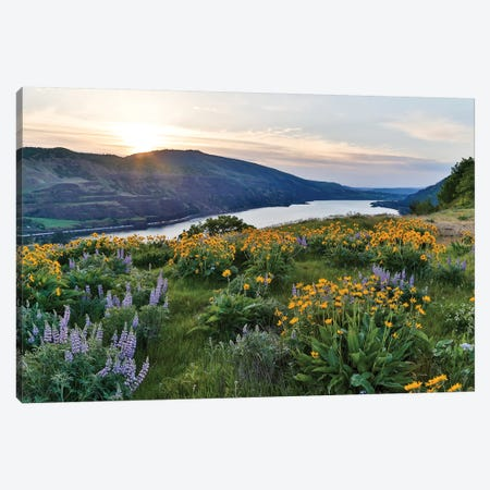 Fields of Balsamroot and Lupine on the Hills above the Columbia River Rowena, Oregon Canvas Print #DGU62} by Darrell Gulin Canvas Print