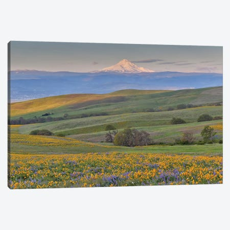 Sunrise and Mt. Hood with Springtime wildflowers, Dalles Mountain Ranch State Park, Washington State Canvas Print #DGU68} by Darrell Gulin Canvas Art Print