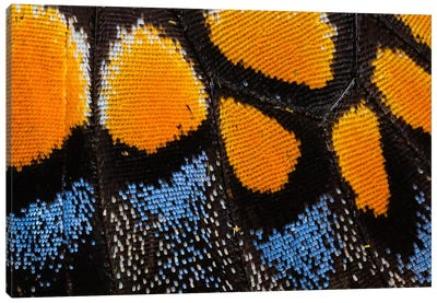 Butterfly Wing Macro-Photography I Canvas Art Print