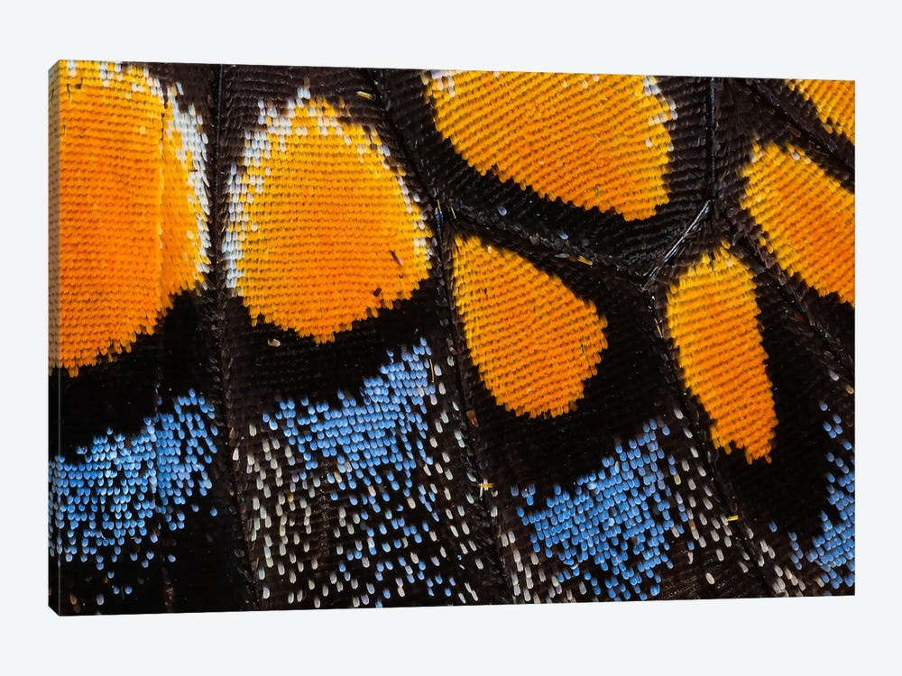 Butterfly Wing Macro-Photography I by Darrell Gulin 1-piece Art Print