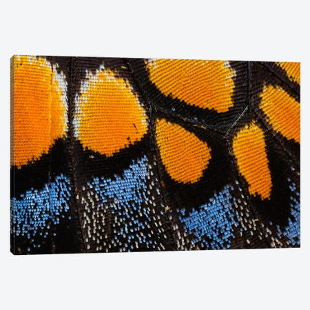 Butterfly Wing Macro-Photography I Canvas Print #DGU8} by Darrell Gulin Canvas Print