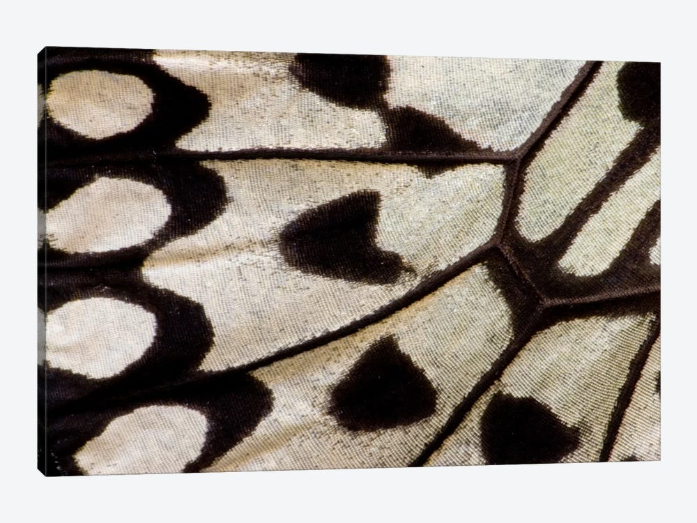 Butterfly Wing Macro-Photography II by Darrell Gulin 1-piece Canvas Artwork