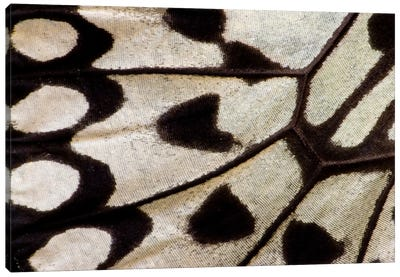 Butterfly Wing Macro-Photography II Canvas Art Print
