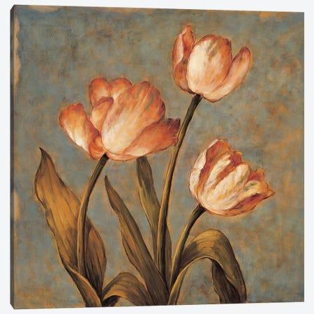 Timeless II Canvas Print #DHA6} by Diane Harper Canvas Art