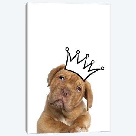 Cute Puppy With Crown Mastiff Dog Canvas Print #DHV23} by Design Harvest Canvas Art