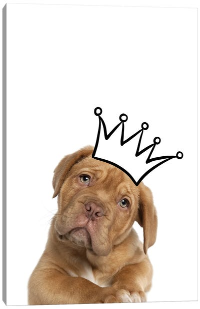 Cute Puppy With Crown Mastiff Dog Canvas Art Print