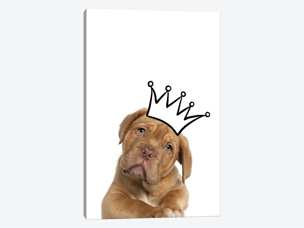 Cute Puppy With Crown Mastiff Dog by Design Harvest 1-piece Canvas Art