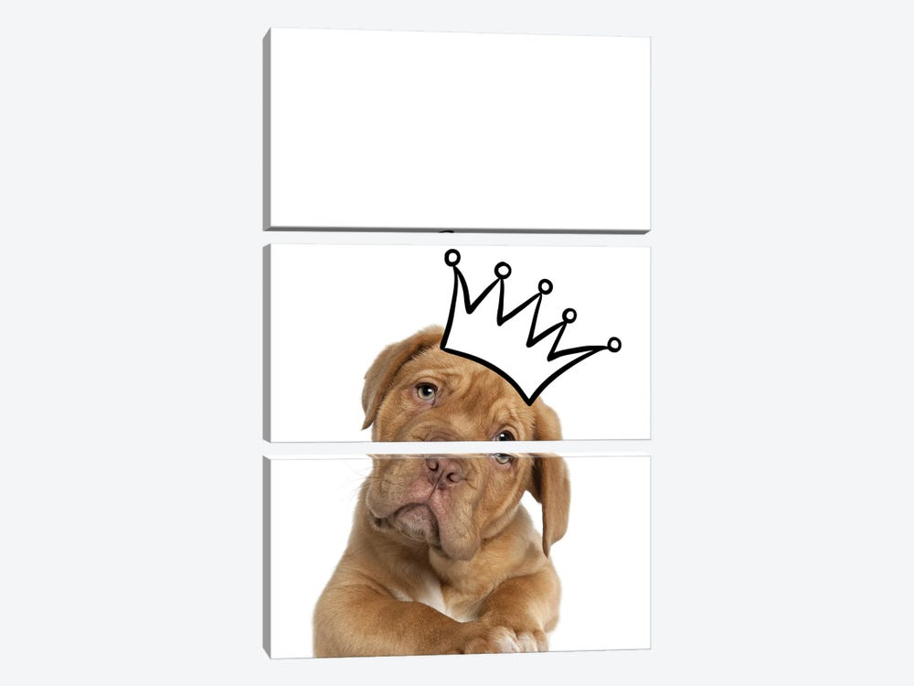 Cute Puppy With Crown Mastiff Dog by Design Harvest 3-piece Canvas Artwork