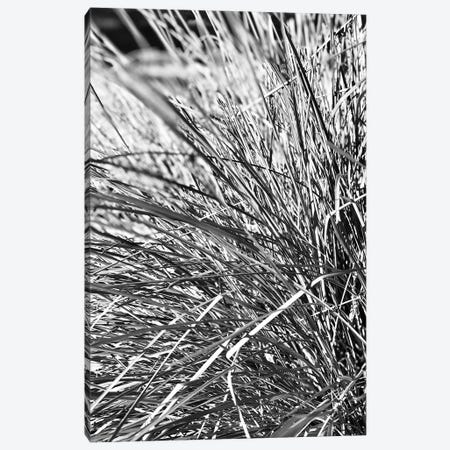 Abstract Photography Black And White Plant Leaves Canvas Print #DHV260} by Design Harvest Canvas Art Print