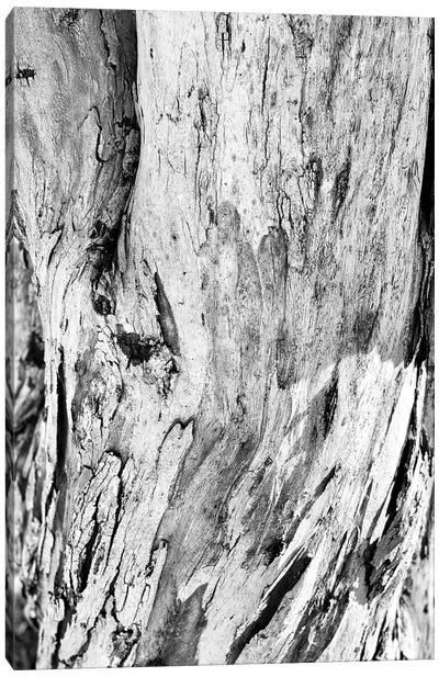 Abstract Photography Black And White Tree Bark Canvas Art Print