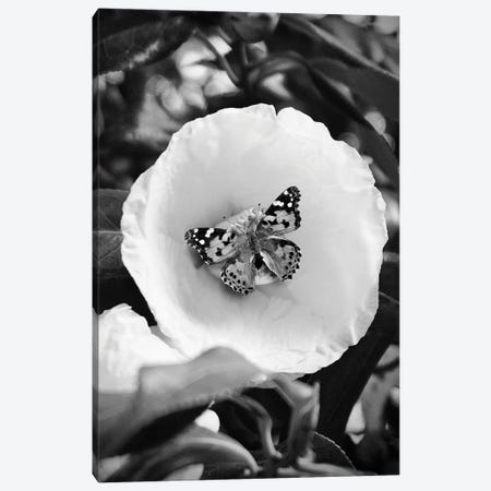 Flower With Butterfly Black And White Photography Canvas Print #DHV268} by Design Harvest Art Print