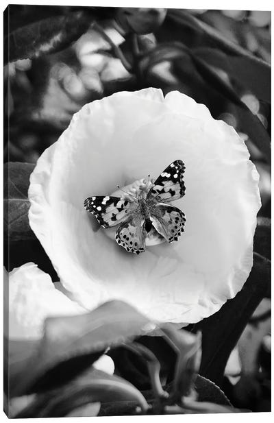 Flower With Butterfly Black And White Photography Canvas Art Print