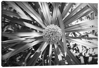 Fern With Cluster Of Flowers Black And White Photography Canvas Art Print