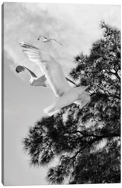 Seagulls Flying With Tree Silhouette Black And White Photography Canvas Art Print