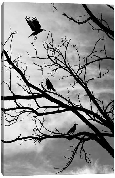 Moody Crows In A Tree On Abstract Black Branches Collage Canvas Art Print