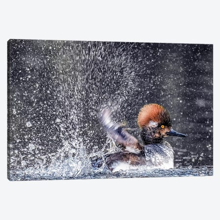 Bathing Canvas Print #DHY1} by David H. Yang Canvas Art