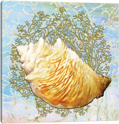 Shell Medley IV Canvas Art Print