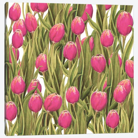 Tulip Symphony II Canvas Print #DIN27} by Diannart Canvas Art