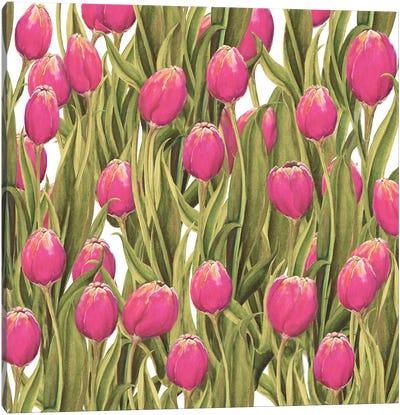 Tulip Symphony II Canvas Art Print
