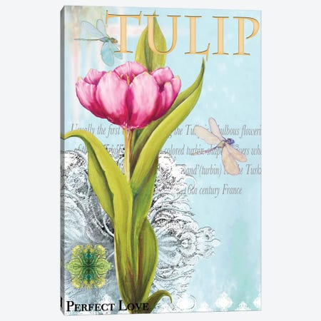 Elegant Tulip I Canvas Print #DIN5} by Diannart Canvas Artwork