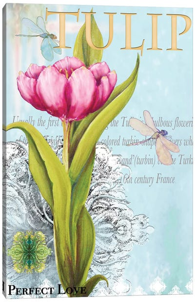 Elegant Tulip I Canvas Art Print
