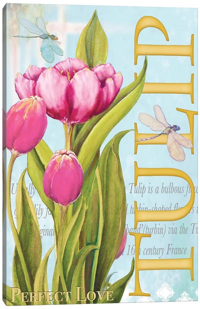 Elegant Tulip II Canvas Art Print