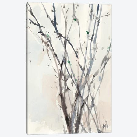 Watercolor Branches II Canvas Print #DIX32} by Samuel Dixon Canvas Art