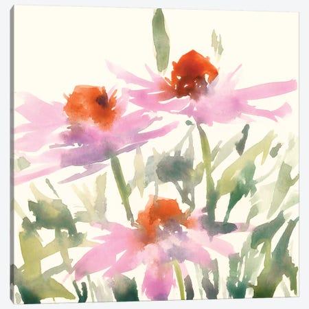 Daisy Garden Views I Canvas Print #DIX96} by Samuel Dixon Canvas Art Print